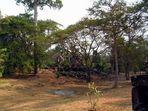 Preah Pithu II