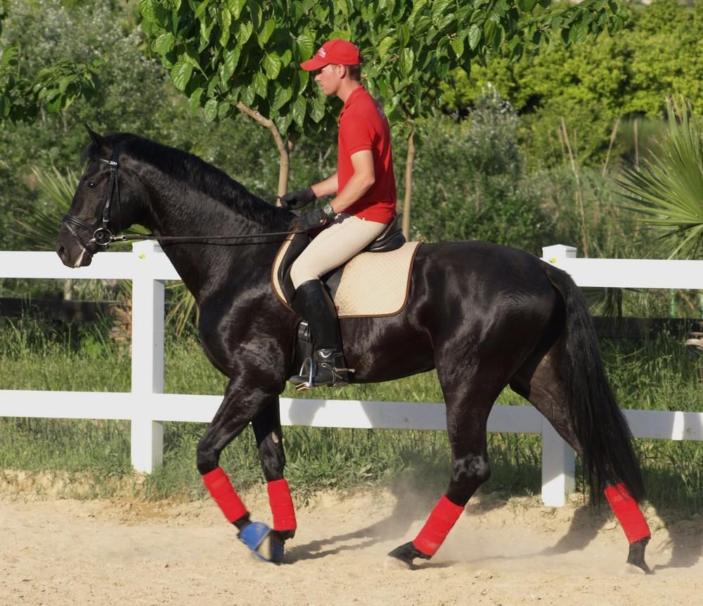 Precioso caballo...