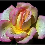 Precious petals