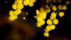 Premier clin d'Oeil du printemps 2015 - Erste Wink Frühling 2015 (Riviera région Cannes)