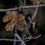 Première gelée