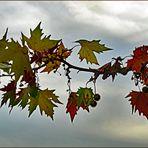 premiers signes  d automne.....