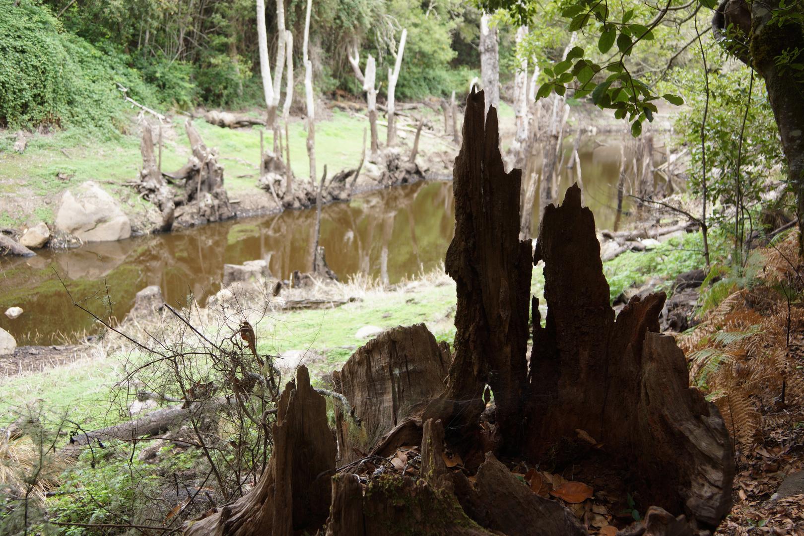 Presa de Meriga - ein versunkener See im Zauberwald (1)