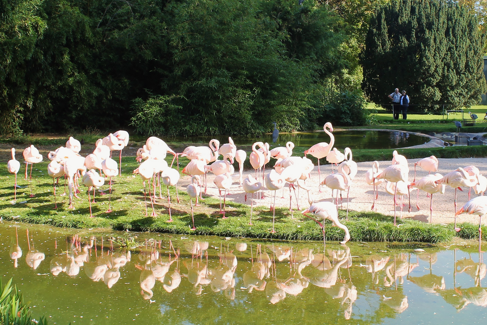 Pretty Flamingos