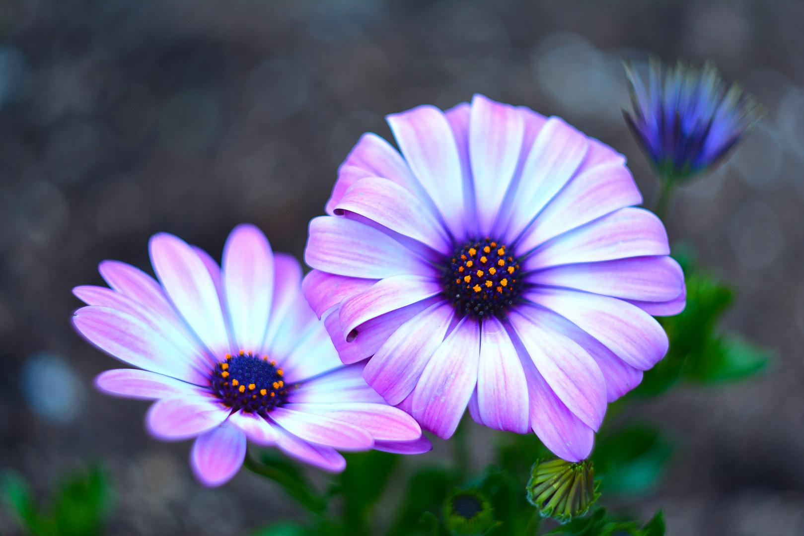Pretty Flowers Foto Bild Pflanzen Pilze Flechten Blten