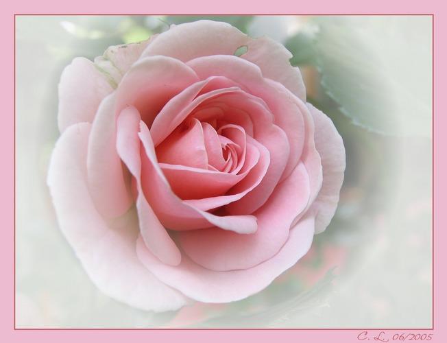 Pretty in Pink II