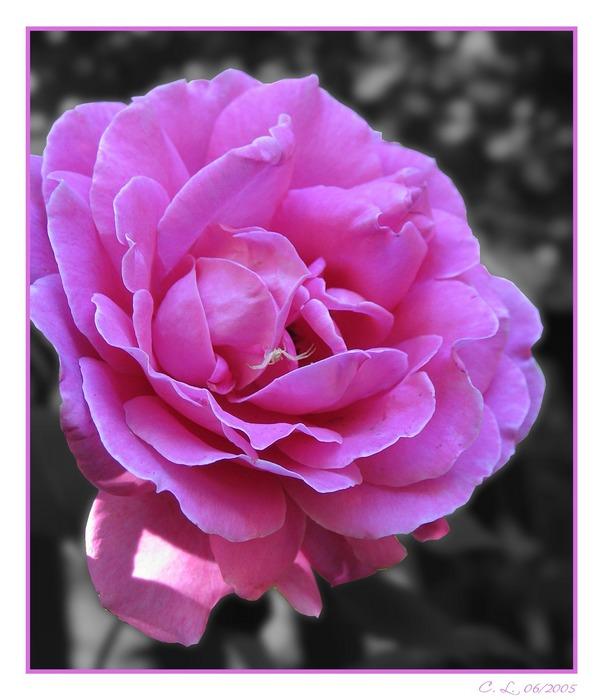 Pretty in Pink III