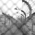 prigionia