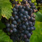 prima di vino rosso