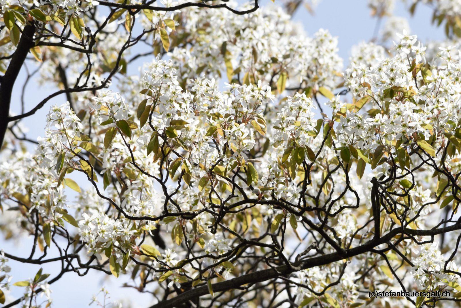 """""""primavera."""""""