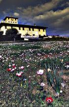 Primavera a Villa Petraia (Firenze)