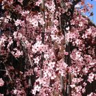 Primavera adelantada