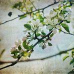 Primavera cautiva