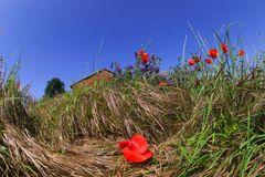primavera dall'ombra dei fossi (2)