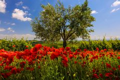 primavera dall'ombra dei fossi (3)