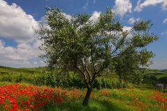 primavera dall'ombra dei fossi (4)