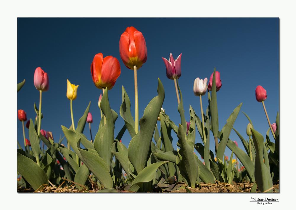 ::. Primavera .::