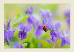 Primavera - Dettagli # 2