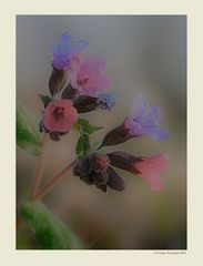 Primavera - Dettagli # 3