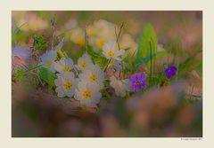 Primavera - Dettagli # 4
