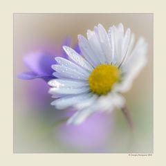 Primavera - Dettagli # 6
