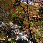 Primavera en Barcena