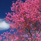 Primavera en Chajari-09-2008 (3)