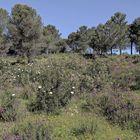 Primavera en Los Villares