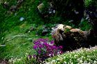 Primavera en plena naturaleza