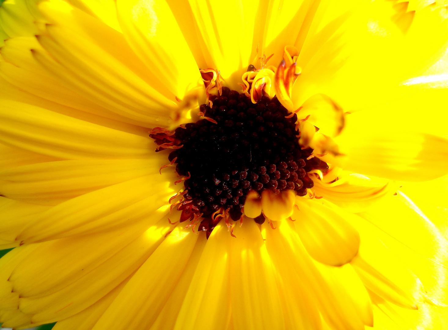 Primavera florida-1