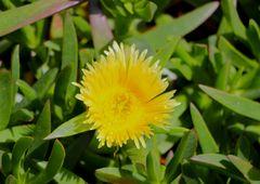 Primavera giallo oro...