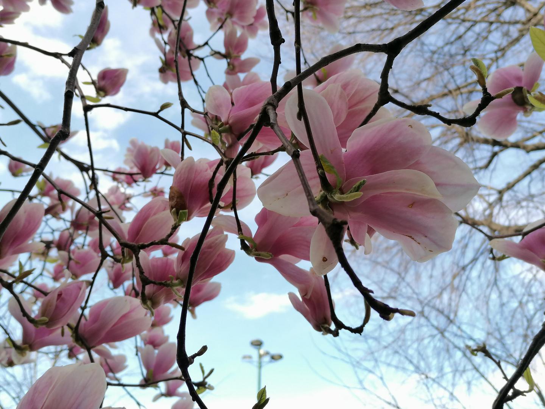Primavera in città
