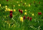 Primavera in Lessinia