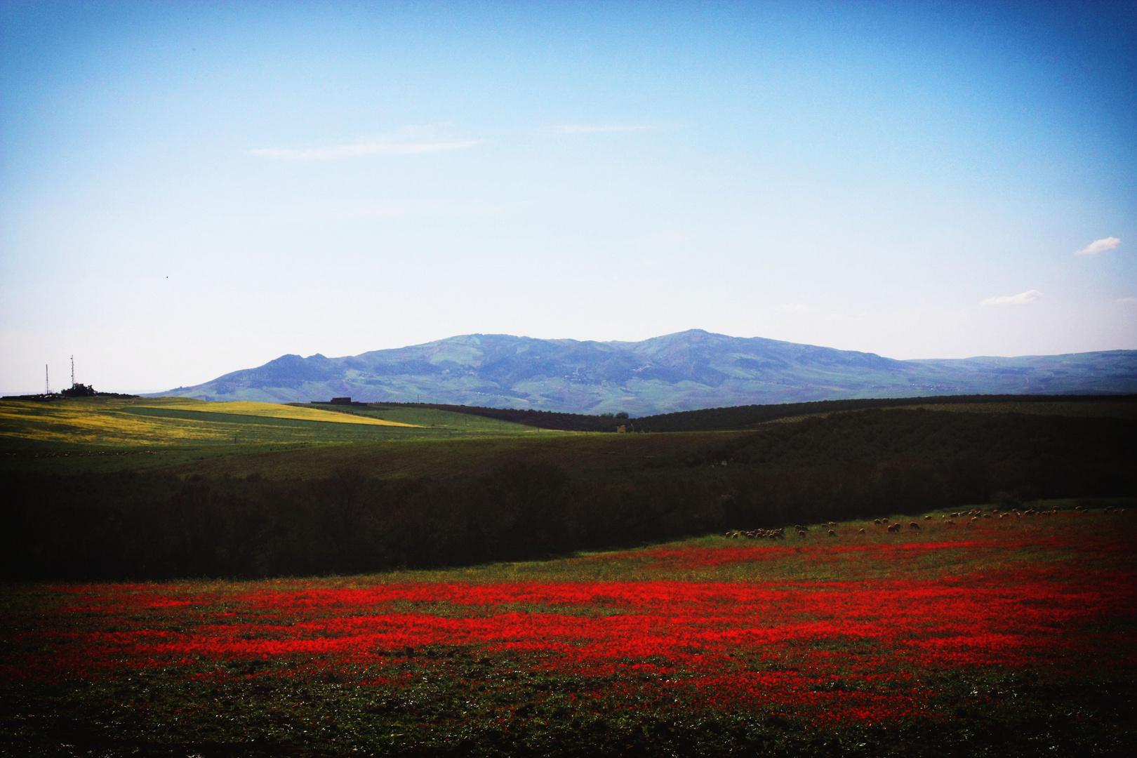 Primavera mediterranea
