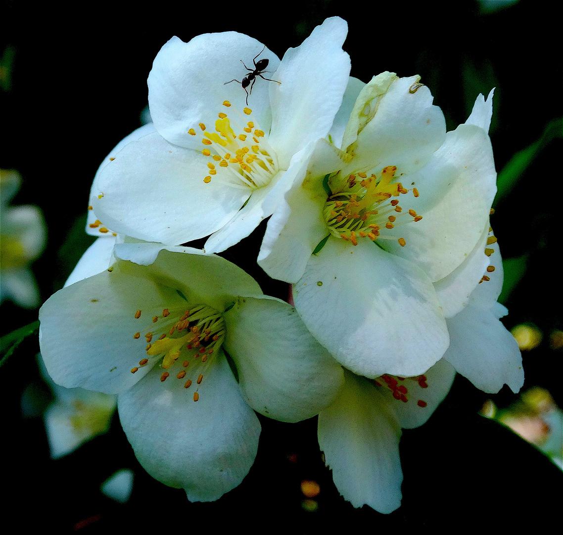 Primavera perfumada.