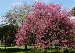 Primavera Romana
