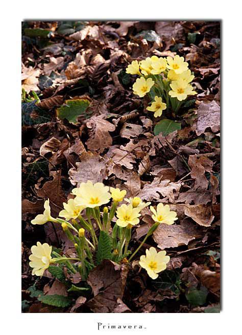Primavera(2006)