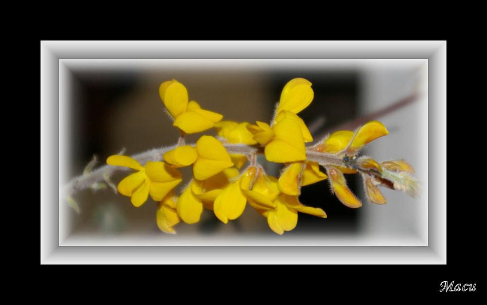 Primaveraa 09