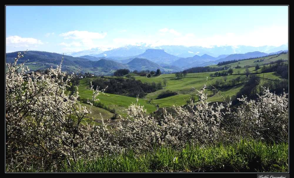 ..primavera..in arrivo..