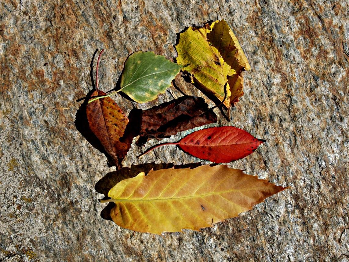 Prime avvisaglie d'autunno...
