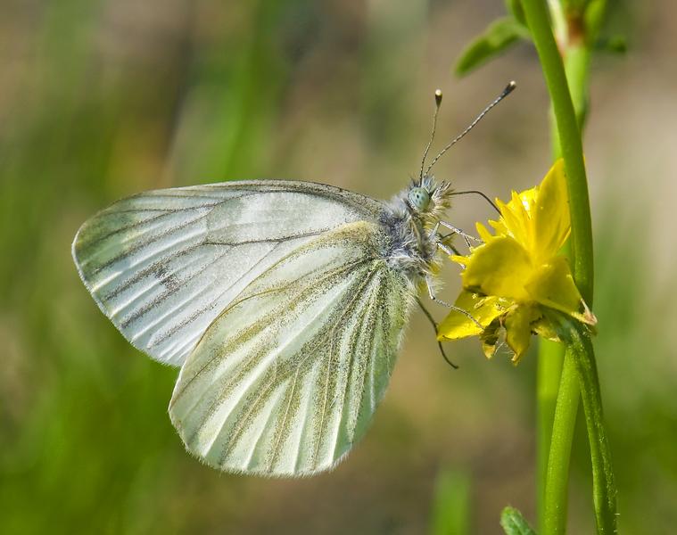 Prime farfalle