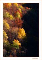 Prime luci in autunno...
