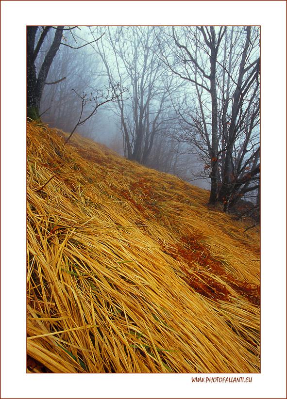 Prime nebbie d'autunno