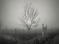 """"""" Primera niebla de la mañana"""""""