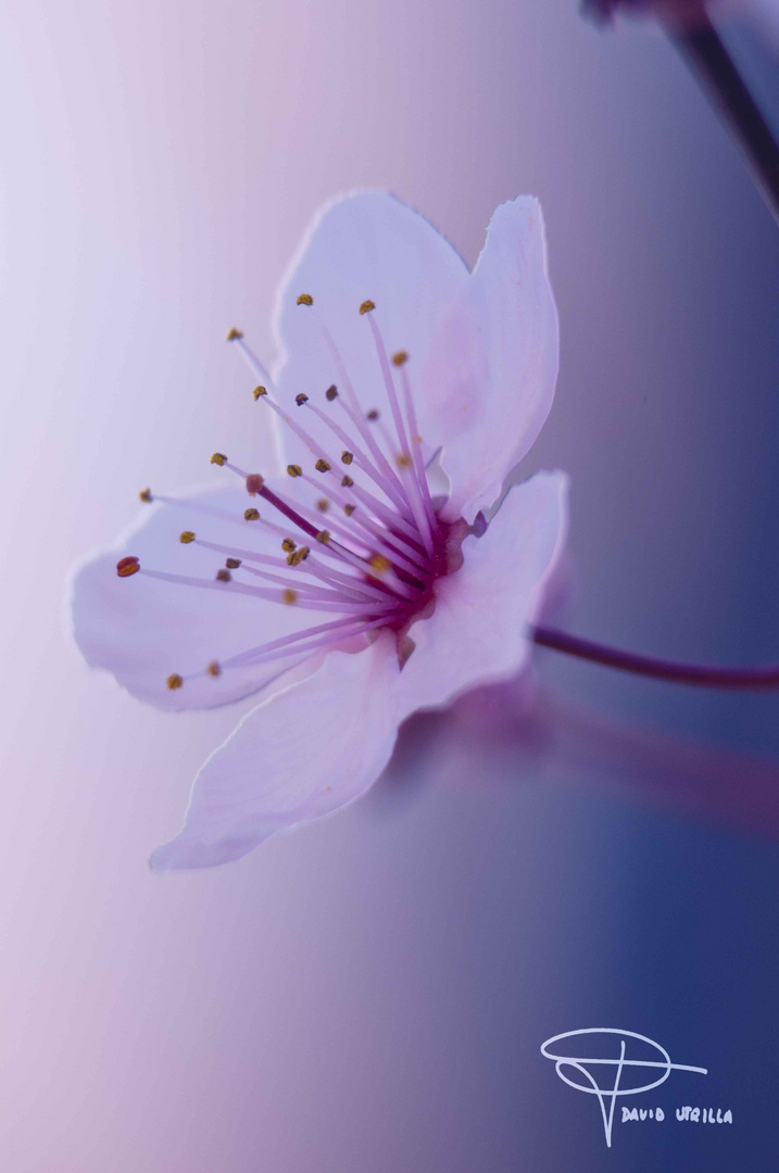 Primeras flores de primavera