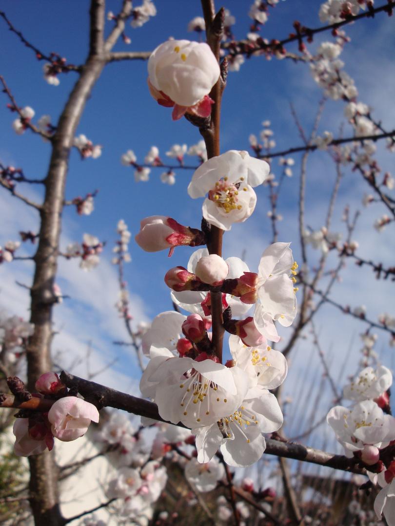 Primi segni di primavera