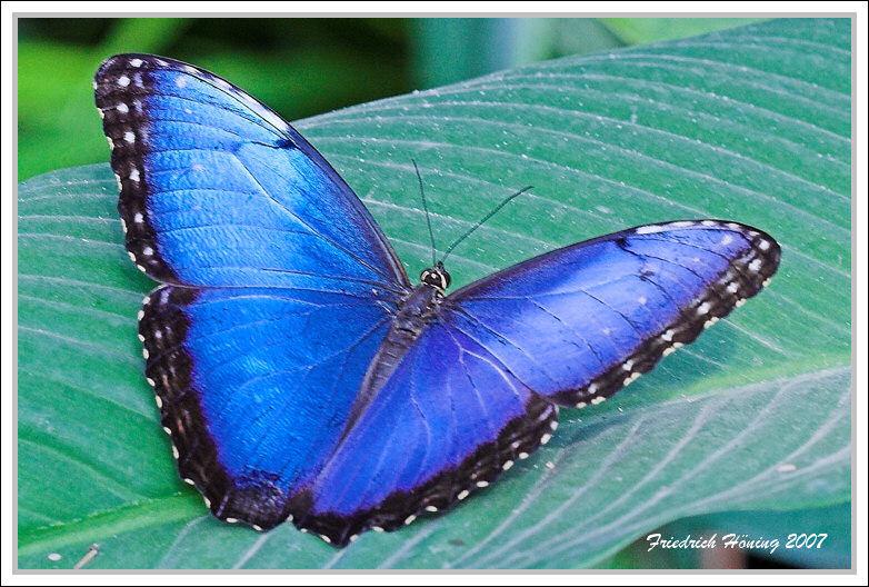 princely blue