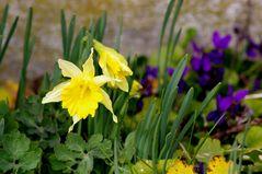 printemps au jardin ....