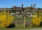 Printemps au / Primavera en / Frühling im = Tessin...08