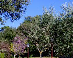 Printemps en Provence ....